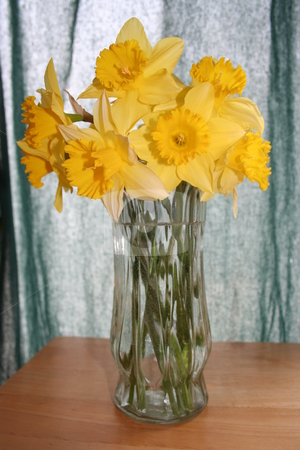 Yellow Daffodils in Clear Vase stock photo, Yellow Daffodils in a clear glass vase by Debbie Hayes