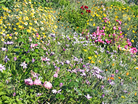 Flowers field stock photo,  by Sinisa Botas