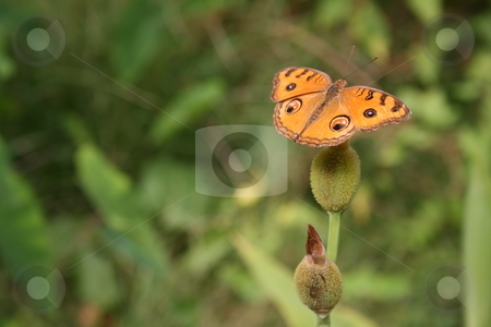 Orange butterfly stock photo, Orange butterfly set against a green background by Louise Blankley