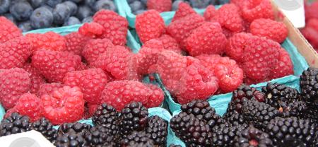 Raspberries and Blackberries stock photo, Brightly colored raspberries and blackberries at the market. by Steve Stedman