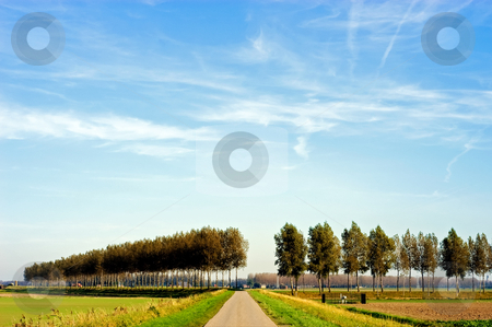 Landscape with poplars stock photo, Typical Dutch flat polder landscape by Wino Evertz