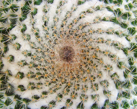 Cactus stock photo, A close-up of a top of a cactus by Ivan Paunovic