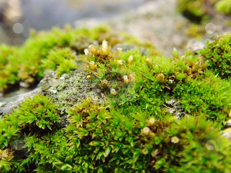 Moss stock photo, A close-up of a moss on a dead tree by Ivan Paunovic