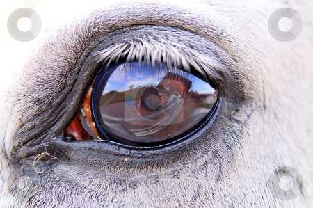 Eye of a horse stock photo, Closeup of the eye of a white horse, showing the surroundings and the photographer. by Emmanuel Keller