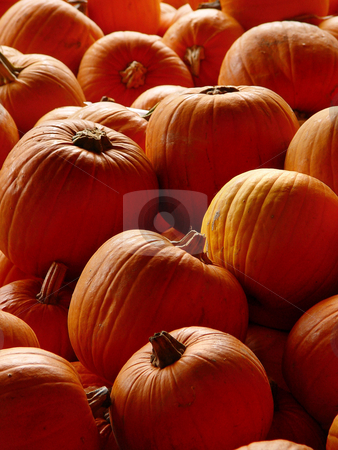 Orange pumpkins stock photo, Closeup on a display with orane pumpkins. Picture taken at a pumpkin contest in Switzerland by Emmanuel Keller