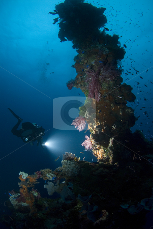Diver with Light on Forward Mast stock photo, A Diver shines their light on the forward mast to show off the vibrant colors of the coral growth developed in the 60 years the Hoki Maru has rested on the bottom of Truk (Chuuk) Lagoon in Micronesia, a casualty of theWorld War II Operation Hailstone, February 1944. by A Cotton Photo