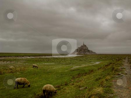 Grazing sheep stock photo, Le mont st Michel by John Tsilidis
