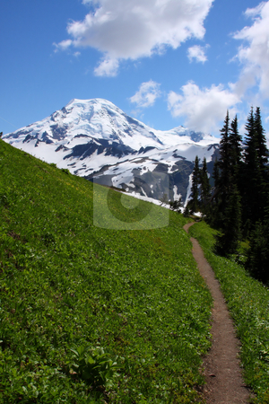 Trail Portrait stock photo, Foot path in the late summer through a high mountain meadow headed towards the mountain. by Steve Stedman