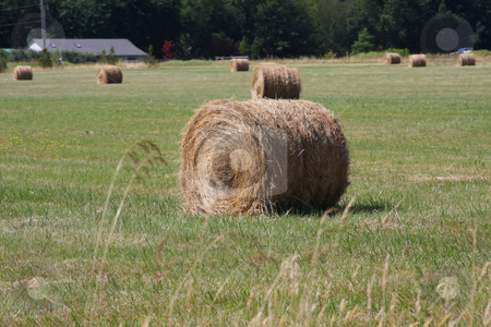 Hay Farming stock photo, Round bales of hay in a pasture with green grass sprouting. by Steve Stedman