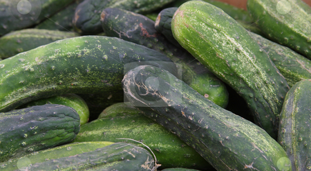 Farmers Market Cucumbers stock photo, A variety of fresh cucumbers at a farmers market. by Steve Stedman