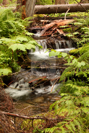 Forest Stream Waterfall stock photo, Small waterfall in a forest stream surrounded by trees. by Steve Stedman