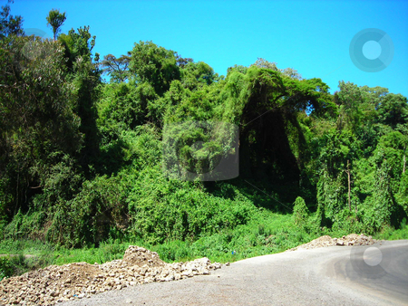 Green Cove stock photo, Beautiful green cove created by shrubs,  vines and trees on the roadside in Tanzania near Kenya border. by Rose Nthiwa