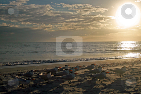 Stunning Sunset stock photo, A Stunning Sunset over the Gulf of Mexico. by Lucy Clark