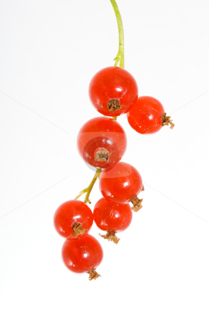 Red Currants stock photo, A bunch of berries of red currant - Ribes rubrum by Petr Koudelka