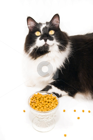 Cat Food stock photo, Cat and catfood display by Jack Schiffer
