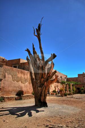 Tree in wasteland stock photo,  by John Tsilidis
