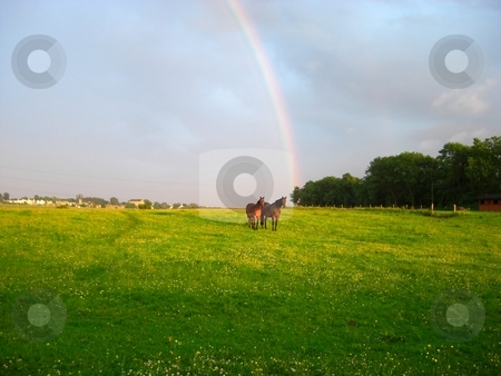 Horses stock photo, Horses with rainbow by Juliet Photography