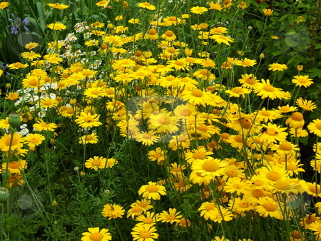 Flowers stock photo, Colourful flowers in the park on summer day by Juliet Photography