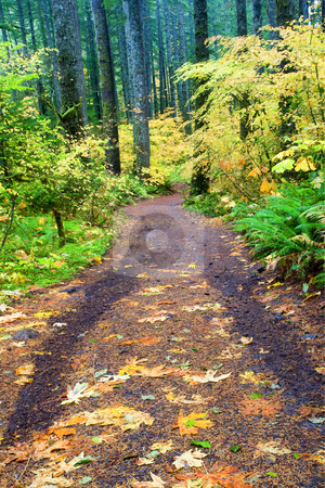 The Road less Traveled stock photo, A wooded lane lined with autumn leaves looks to be a road less traveled. by Mike Dawson