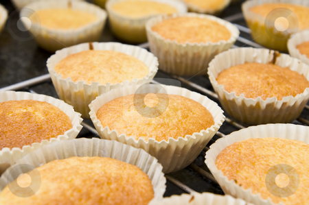 Fresh cupcakes stock photo, Freshly baked cupcakes cooling down on an oven grid. by Nicolaas Traut