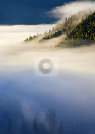 Of light and Shadow stock photo, A bit of morning light illuminates the dark forest below the fog here and there and a ridge of fir and larch emerge into the light on the far side. by Mike Dawson