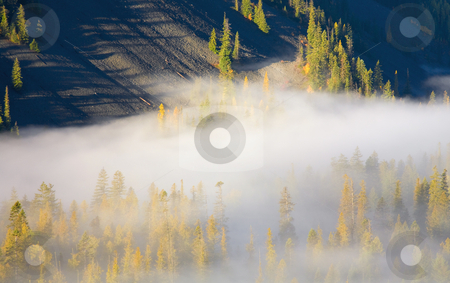 Piercing the Blanket stock photo, Larch Trees decked out in Autumn Gold pierce the blanket of morning mist as the sun rises over Clear Creek Canyon. by Mike Dawson