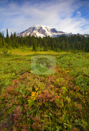 Alpine Meadows stock photo, Autumn color creeps into a dew covered meadow beneath the majestic Mt. Rainier by Mike Dawson