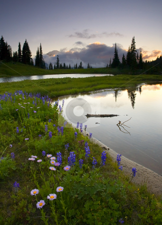 Hidden from the Sun stock photo, Mt. Rainier hidden from the setting sun by a thick cloudbank with lupine and asters lining a small alpine lake in the foreground. by Mike Dawson