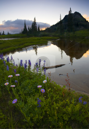Wildflower Sunset stock photo, Lupine and aster line the banks of a small alpine lake near the PAcific crest as the sun set behind some clouds obscuring Mt. Rainier. Yakima Peak looms large over this tranquil scene. by Mike Dawson