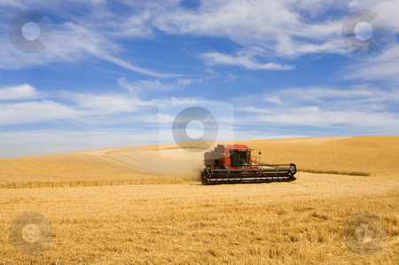 Wheat Harvest stock photo, A combine harvesting golden wheat among the hills of the Palouse in Eastern Washington. by Mike Dawson