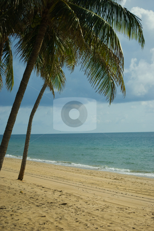 Tropical Paradise stock photo, Palm tree on sandy secluded beach by Robert Cabrera