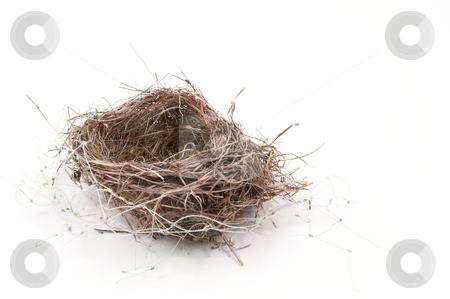 Birdnest stock photo, An empty nest of a bird ready for occupancy. by Robert Byron