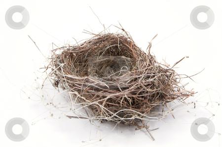 Birdsnest stock photo, The empyt nest of a birs ready for occupancy. by Robert Byron