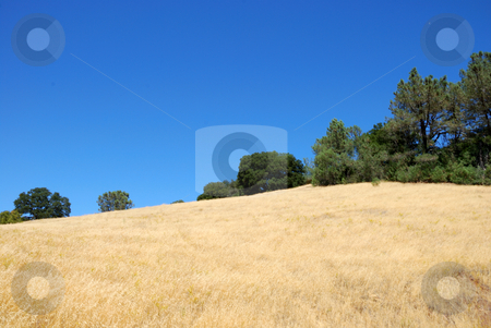 Dry Hill With Blue Sky stock photo, Dry Hill with Green BUshes SHown Against Blue Sky by Denis Radovanovic
