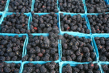 FResh Blackberries stock photo, Just picked fresh blackberries, for sale in blue boxes by Tom and Beth Pulsipher