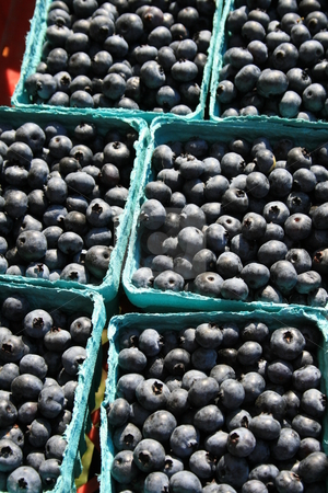 Boxes of Fresh Blueberries stock photo,  by Tom and Beth Pulsipher