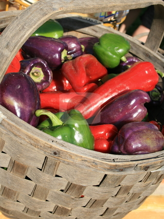 Variety of Fresh Peppers stock photo, A variety of freshly harvested red, purple and green peppers, in a basket by Tom and Beth Pulsipher