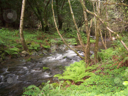 Stream in woods stock photo, A flowing stream through teh redwood forest by Sam Sapp