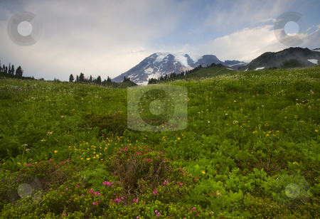 New Day Dawning stock photo, First light reaches the clouds above Mt. Rainier with a meadow of colorful wildflowers in the foreground. by Mike Dawson