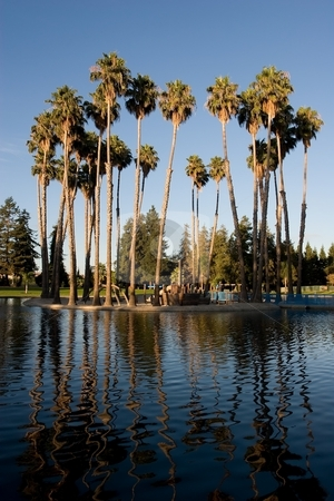 Las Palmas Park stock photo, A city park with lush palm trees surrounded by a picturesque pond by Mariusz Jurgielewicz