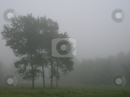 Stand of Trees on a Foggy Maine Morning stock photo, A stand of trees in an open meadow, on a foggy Maine morning. (room for copy) by Tom and Beth Pulsipher