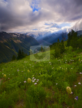 Hidden in the Clouds stock photo, Mt. Rainier peaking out from behind some late afternoon summer clouds as the White River winds down a deep valley below the meadow covered in aster, lupine and Western Anenome. by Mike Dawson