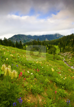 Wildflower Meadow stock photo, A alpine meadow near the pacific crest trail in Washington state. The meadow ablasze with wildlflowers, lupine, paintbrush and beargrass. by Mike Dawson