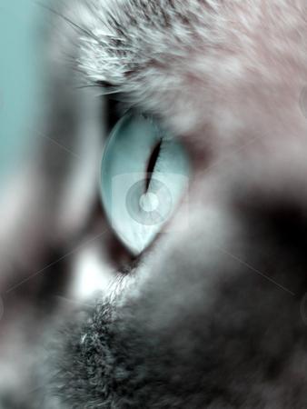 Cat eye macro stock photo, Macro of a beautiful cat eye taken from the side by Laurent Dambies