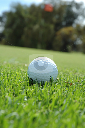 Time to chip on stock photo, Golf ball ready to chip on the green by Irene Scales