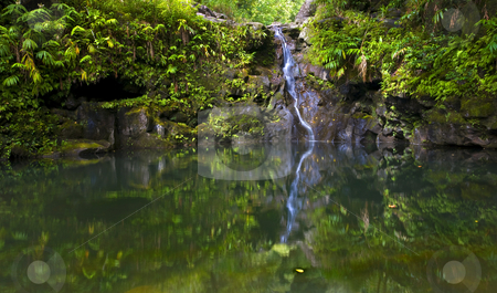 Tropical Pool stock photo, A small waterfall along the Road to Hana redcued to a trickle by drought conditions on the island of Maui. by Mike Dawson