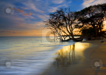 Reflections of PAradise stock photo, A golden beach near Lahaina glowing in the light of the setting sun as a gnarled Banyan Tree appears to reach for drink in the rising tide. by Mike Dawson