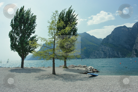 Surfing shore stock photo, Garda lake shore with surfing board and three beautiful trees by Natalia Macheda