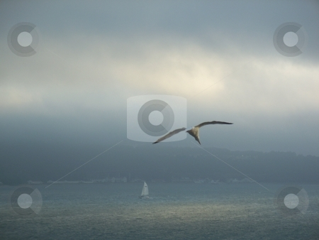 Sun Breaking Through Over A Sailing Boat  stock photo, This photo was took on Alcatraz island in america. this picture shows a sailing boat in the ocean with the sun breaking through the clouds and a seagull in mid flight. this is a high quality image (8 megapixels) and is the perfect relaxing sea view everyone enjoys. by Andy C