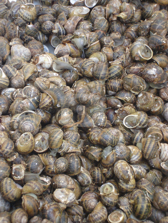 Snails  stock photo, Garden snails background is exelent desert in greece by EVANGELOS THOMAIDIS